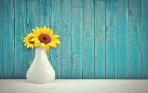 Blue shiplap wall and sunflower