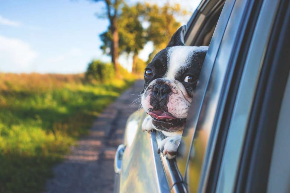 Moving with pets? You and your lovely friend will feel better and safer if you travel together!