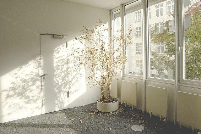 Willow houseplant