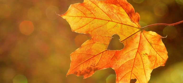 A leaf with a heart - like South Toms River movers have!
