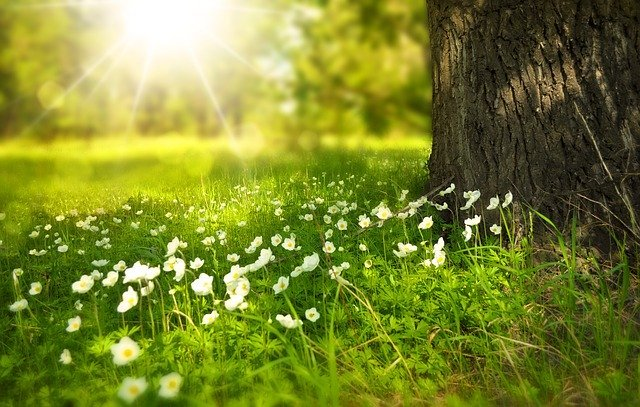 grass and flowers are a common sight during spring moving