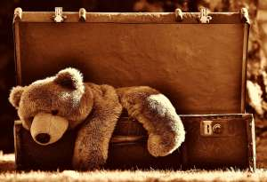 A brown bear in a suitcase
