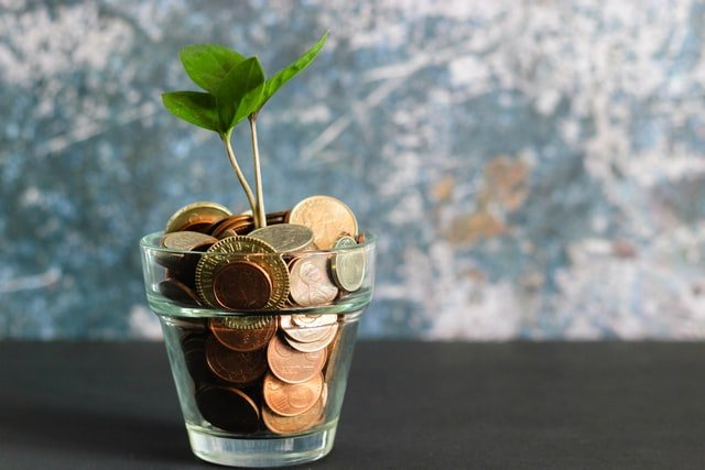 A plant that is full of money instead of soil.