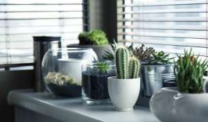 plants are a great way to cozy up your new home